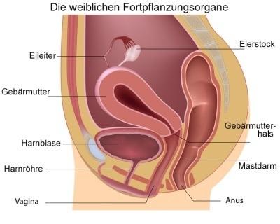 Amerikanische Mädchen Vulva Bilder